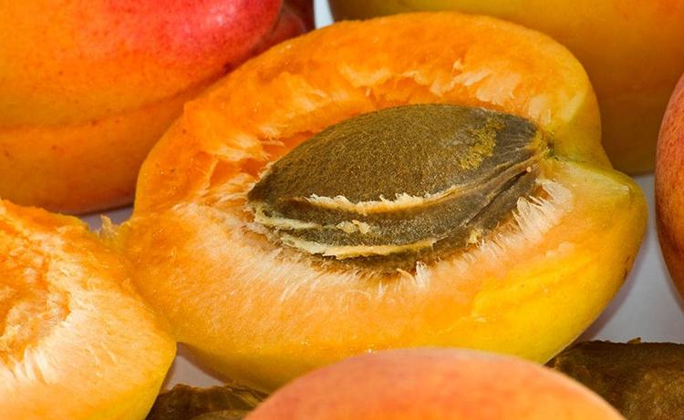 Косточка внутри абрикоса