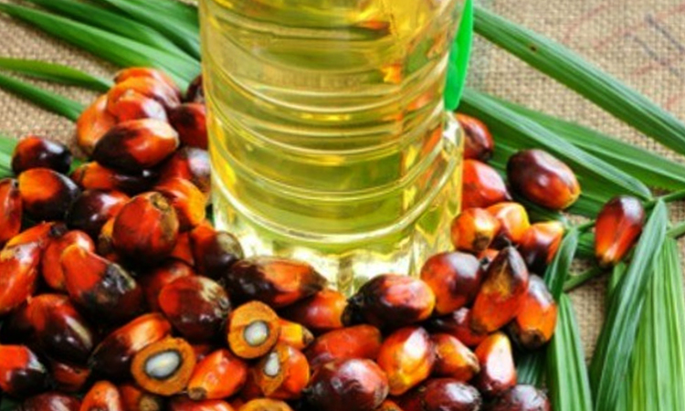 Свежее пальмовое масло