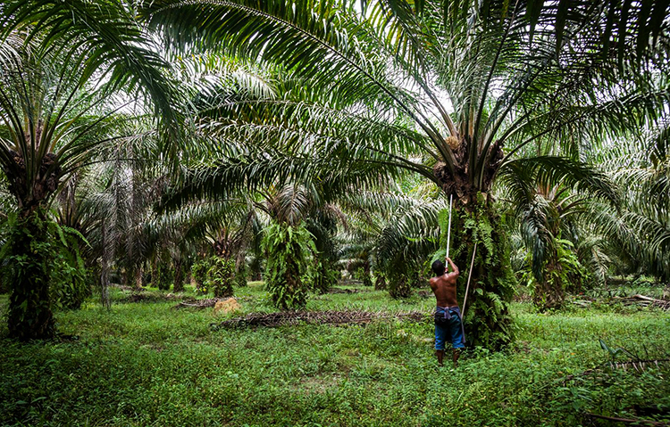 Растущие пальмы