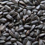 Польза и вред семян подсолнуха для организма