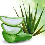 Алоэ: польза, лечебный свойства и возможный вред