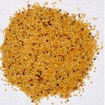Семена амаранта: польза, вред и как принимать