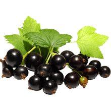 Черная смородина — польза и вред для здоровья