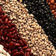 Польза и вред бобов для здоровья человека