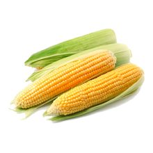 Кукуруза — польза и вред для здоровья