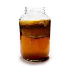 Чайный гриб — в чем польза и вред