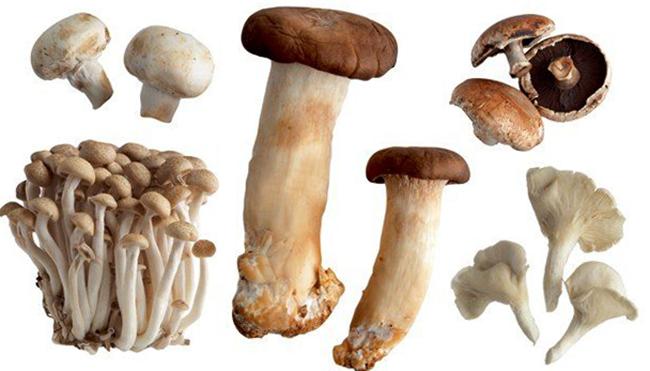 Много разных грибов