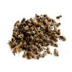 Пчелиный подмор: польза, вред и как принимать