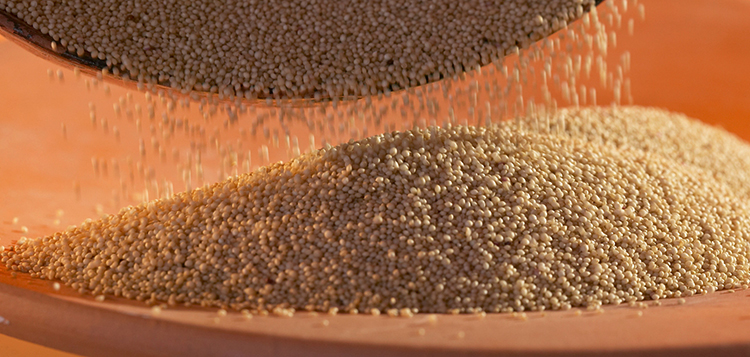 Перед приготовлением семян
