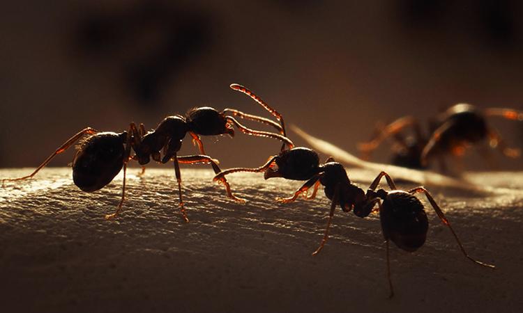 3 муравья