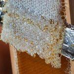 Пчелиный забрус: польза, вред и как применять