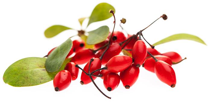 Горсть ягод барбариса
