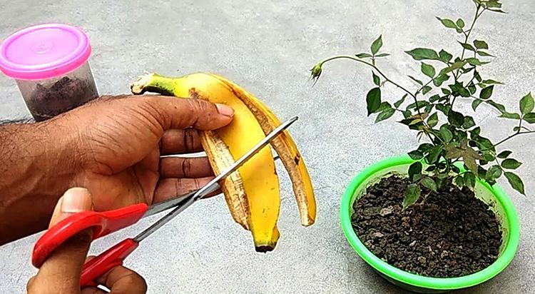 Использование для растений