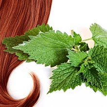 Польза и возможный вред крапивы для волос