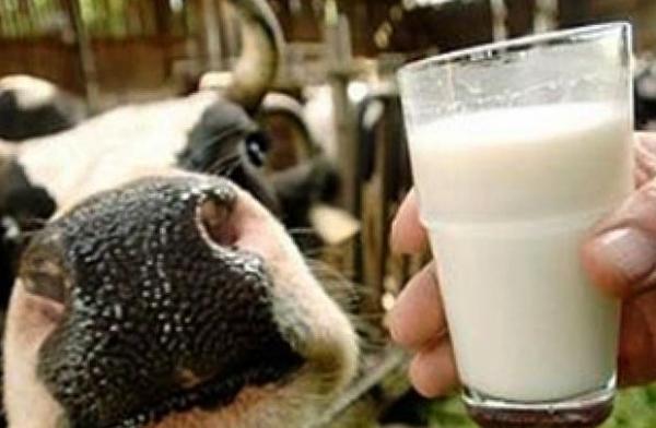 Парное молоко и корова