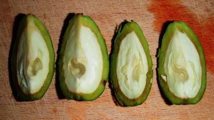 Разрезанный зеленый грецкий орех