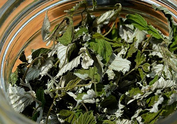 Сушка листьев земляники