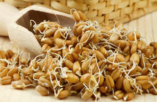 Свежие зародыши пшеницы