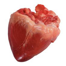 Свиное сердце — польза и вред для здоровья