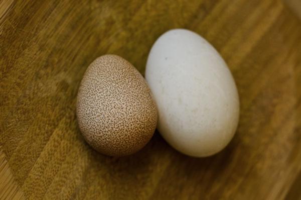 2 яйца цесарки