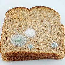 Плесень на хлебе: чем полезна и чем вредна