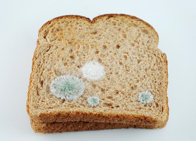 Кусок хлеба с плесенью