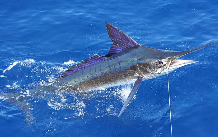 Ловля рыбы марлин
