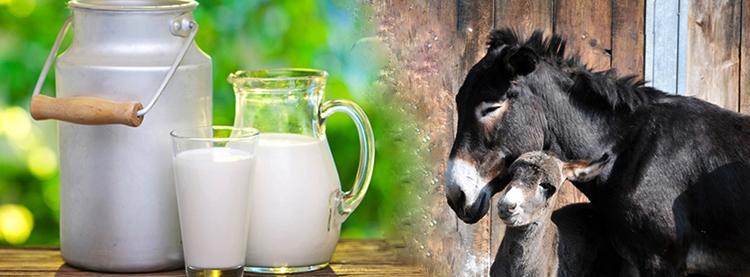 Молоко ослиное