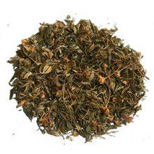 Курильский чай: полезные свойства и вред