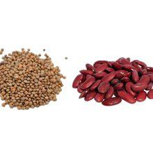 Чечевица или фасоль — что более полезно?