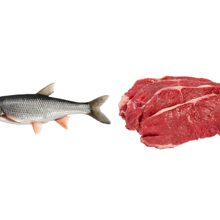 Что полезнее кушать рыбу или мясо