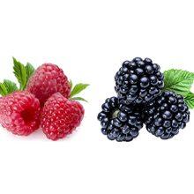Малина или ежевика — какая ягода полезнее?