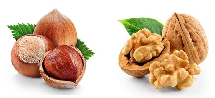 Фундук и грецкий орех