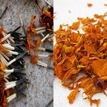 Что в бархатцах более полезно семянка или лепестки