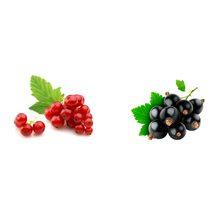 Какая смородина более полезна красная или черная?
