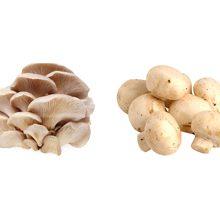 Какие грибы полезнее вешенки или шампиньоны?