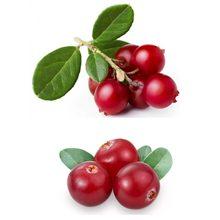 Какая ягода полезнее брусника или клюква?
