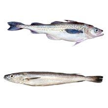 Какая рыба полезнее минтай или хек?