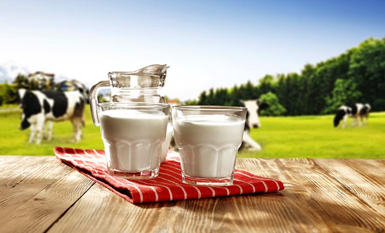 Свежее коровье молоко