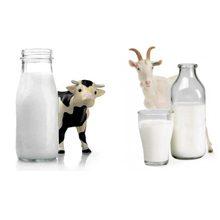 Какое молоко полезнее коровье или козье